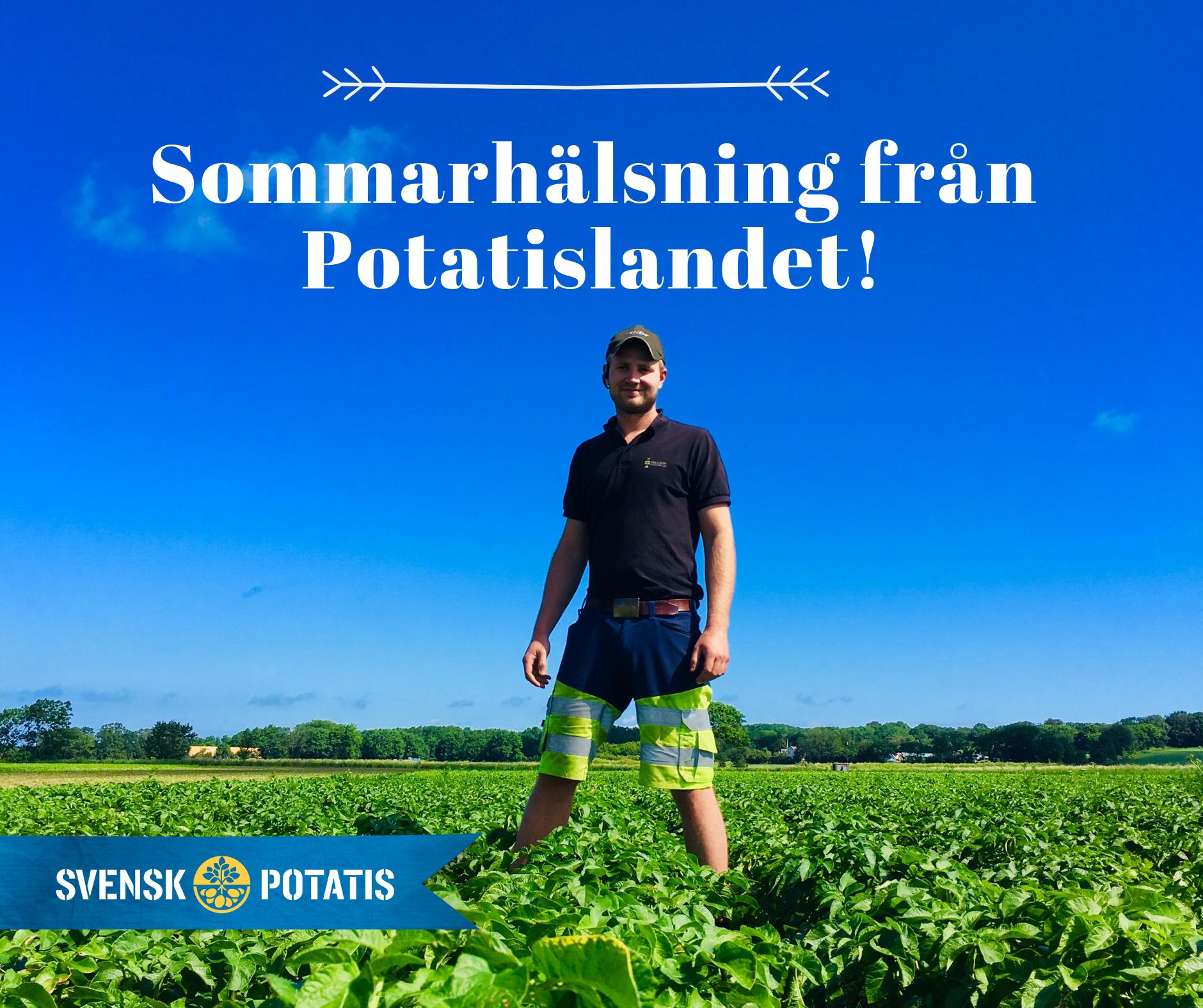 Sommarhälsning från Potatislandet!