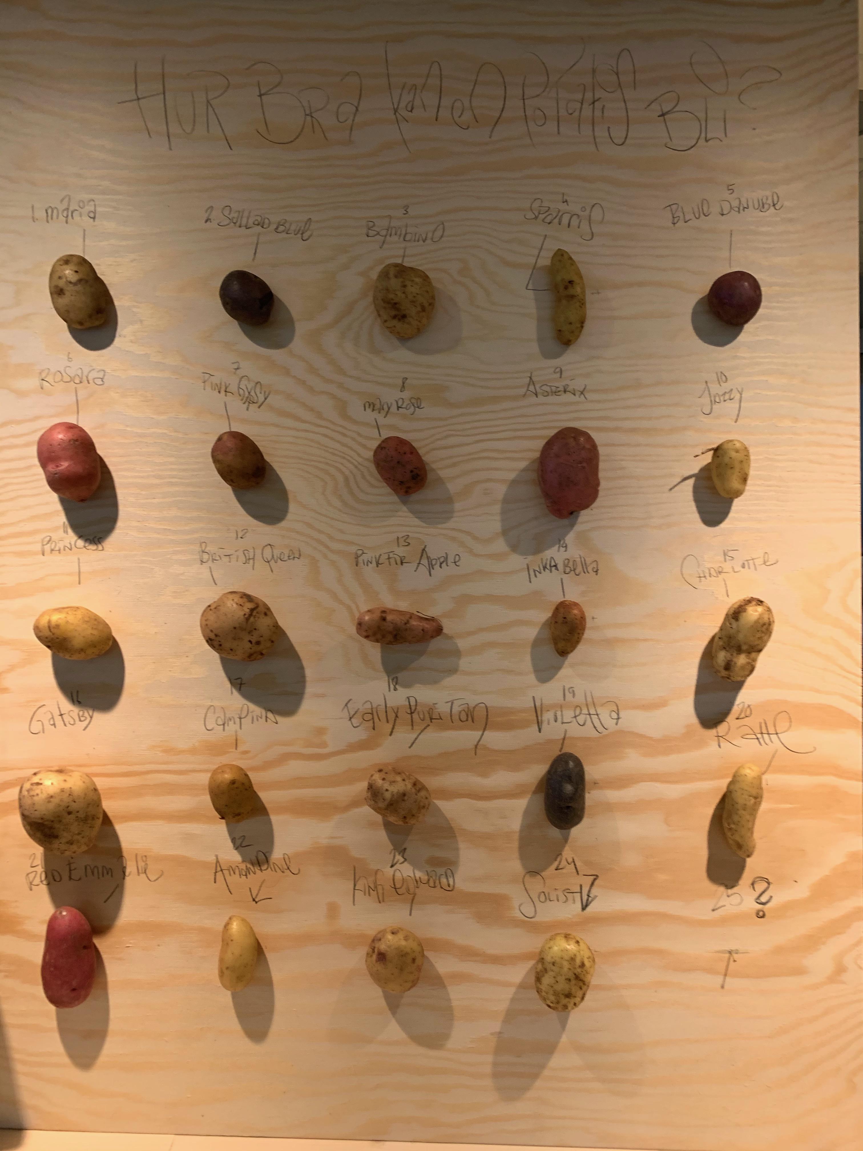 Potatisrapport med provsmakning