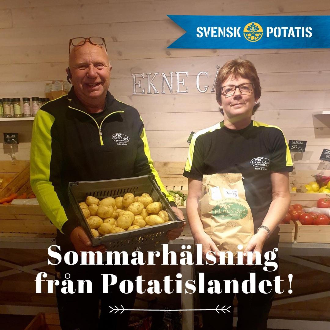 Sommarhälsning från Potatislandet – augusti månad